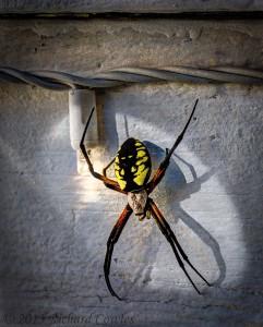 spider1.5