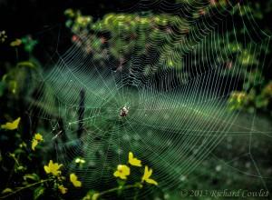 web1.2