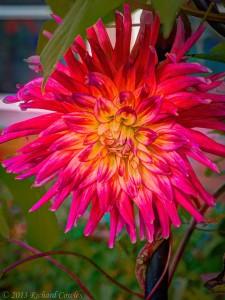 blossom1.4