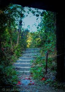 steps1.5