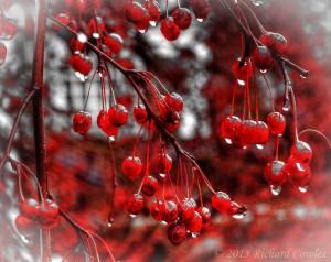 berries1.2